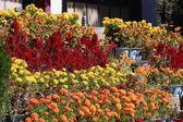 Flowers-Takten Mingyur Phodrang-palace. Norbulingka-Lhasa-Tibet. 1266 — Stock Photo