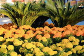 Yellow and orange flowers. Lhasa-Tibet. 1356 — Stock Photo