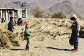 Group of peasants preparing highland barley. Dablung-Tibet. 1549 — Stock Photo