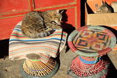 Cats on wicker stools-Pelkhor Chode monastery. Gyantse-Tibet. 1634 — Stock Photo