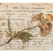 Dried pansy flower and old post card isolated on white — Stock Photo #52410135