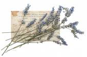 Dried lavender flowers and old post card — Stock Photo