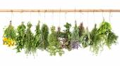 Fresh herbs hanging isolated on white. basil, rosemary, thyme, m — Stock Photo