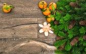 Mandarins and  pine branches — Stock Photo
