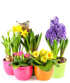 Spring flowers with birds nest. colorful easter decoration — Stock Photo