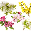 Blossoms of apple and pear tree, cherry twig. — Stock Photo #68244089