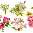 Blossoms of apple tree, cherry twig, pear, forsythia. Set of spr — Stock Photo #77503150