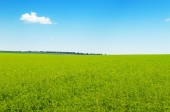 Picturesque green field and blue sky — Stock Photo