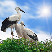 Storks in the nest on the sky background — Stock Photo
