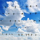Flock of swallows on blue sky background — Stock Photo