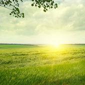 Gröna fält och soluppgång på molnigt himlen — Stockfoto