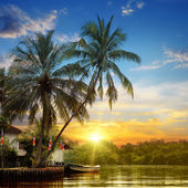 River, beautiful sunrise and tropical palms — Stock Photo
