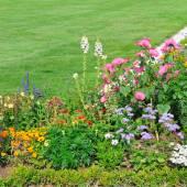 美丽的花坛和绿草 — 图库照片
