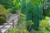Cozy park with stairs and shrubs — Stock Photo