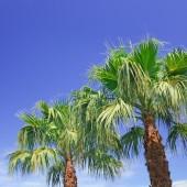 Palm on background of blue sky — Stock Photo