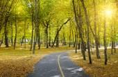 Rays of sun in autumn park — Stock Photo