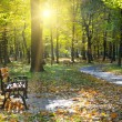 Beautiful autumn park with paths and benches — Stock Photo #58208611