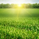 Corn field and sunrise on blue sky — Stock Photo #58718109