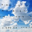Flock of swallows on blue sky background — Stock Photo #58938551