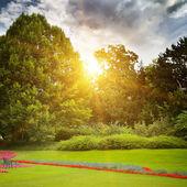 Vacker sommar park och soluppgång — Stockfoto