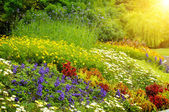 Beautiful background of bright garden flowers — Foto de Stock