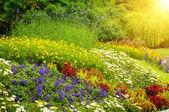 Beautiful background of bright garden flowers — Stockfoto