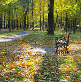 Autumn park with paths and benches — Stockfoto