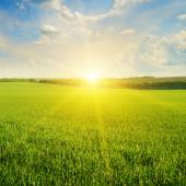 Feld, sonnenaufgang und blauer himmel — Stockfoto