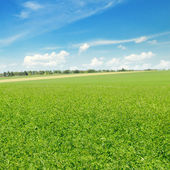 Picturesque green field and blue sky — Foto Stock