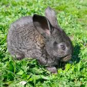 Little rabbit on green grass background — Stock Photo