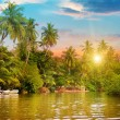 River, beautiful sunrise and tropical palms — Stock Photo #64043047