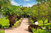 Alley with tropical palm trees and lawn — Stock fotografie