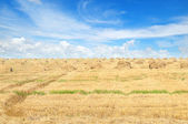 Field with Stacks of straw and blue sky — Stock Photo