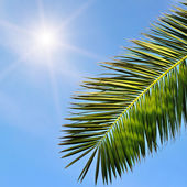 Leaves of tropical palm trees and blue sky — Stock Photo