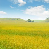 Wheat field and blue sky — Stock Photo