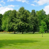 Parco, verde prato e cielo blu — Foto Stock