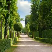 Summer park with a beautiful avenue — Stock Photo