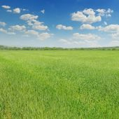 Green field and blue sky with light clouds — Stock Photo