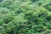 Dense tropical rainforest — Stock Photo