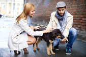 Happy young couple feeding dog — Stok fotoğraf