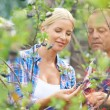 Gardeners looking at aronia crops — Stock Photo #55477977