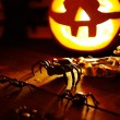 Halloween spiders and jack-o-lantern — Foto de Stock   #55479955