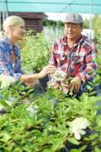 Dois jardineiros — Foto Stock