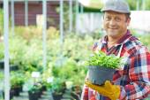 Gardener with green plant — Foto Stock