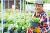 Gardener with green plant — Stock Photo