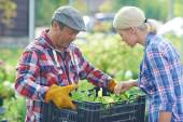 Gardener looking through green seedlings — Foto Stock