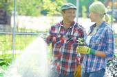Gardener with green plant talking to mature man — Foto Stock