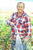 Man planten water geven — Stockfoto