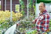Gardener  watering plants — Stock Photo