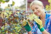 Gardener taking care of plants — Stock Photo